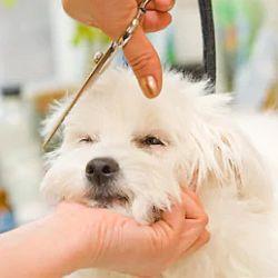 een hond die geknipt wordt